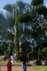 Thailand_King_Palace_Dragon_Palm.jpg